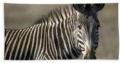Grevys Zebra Standing In Plains Kenya Hand Towel