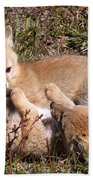 Grey Fox Kitts At Play Bath Towel