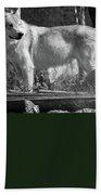 North American Wolf  Hand Towel