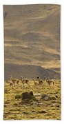 Guanaco Herd, Argentina Bath Towel