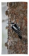 Hairy Woodpecker Bath Towel