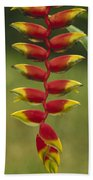 Hanging Heliconia Blooming In Rainforest Bath Towel