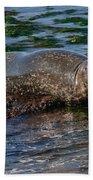 Harbor Seal At Low Tide Bath Towel
