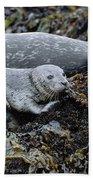 Harbor Seal Pup Resting Bath Towel