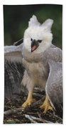 Harpy Eagle Threat Posture Amazonian Bath Towel