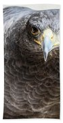 Harris Hawk Ready For Attack Bath Towel