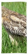 Hawk With Lizard Photograph By Zina Stromberg