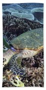 Hawksbill Sea Turtle Bath Towel