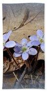 Hepatica Wildflowers - Hepatica Nobilis Bath Towel