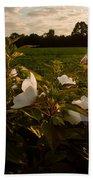 Hibiscus At Sunrise  Bath Towel