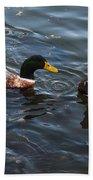 Hibred Ducks Swimming In Beech Fork Lake Bath Towel