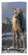 Hoarfrosted Elk Calf Bath Towel