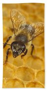 Honey Bee Colony On Honeycomb Bath Towel