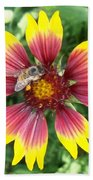 Honey Bee On A Indian Blanket Bath Towel
