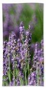 Honeybees On Lavender Flowers Bath Towel