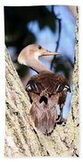 Hooded Merganser Duck Bath Towel