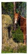 Horse Eating Hay In Eastern Texas Bath Towel