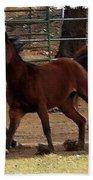 Horse Play Painting  Bath Towel