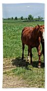 Horses In The Pasture Bath Towel