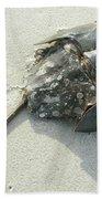Horseshoe Crab - Limulus Polyphemus Bath Towel