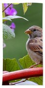 House Sparrow On A Wheel Bath Towel