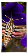 Hummingbird Moth   #8612 Bath Towel