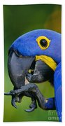 Hyacinth Macaw Anodorhynchus Bath Towel