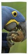 Hyacinth Macaw Habitat Eating Piassava Bath Towel