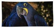 Hyacinth Macaw Bath Towel