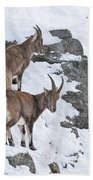 Ibex Pictures 171 Bath Towel