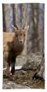 Ibex Pictures 92 Bath Towel