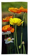 Iceland Poppies In The Sun Hand Towel
