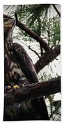 Immature American Bald Eagle Bath Towel