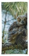 Immature Great Horned Owls Bath Towel