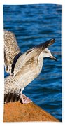 Immature Herring Gull At The Harbour Bath Towel