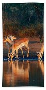 Impala Herd With Reflections In Water Bath Towel