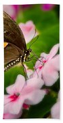 Impatient Swallowtail Bath Towel