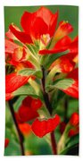 Indian Paintbrush I I Bath Towel