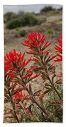 Indian Paintbrush  Bath Towel