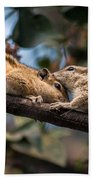 Indian Palm Squirrel Hand Towel