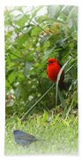 Indigo Bunting And Scarlet Tanager 2 Bath Towel