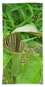 Jack In The Pulpit - Arisaema Triphyllum Bath Towel