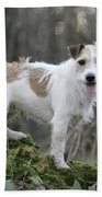 Jack Russell Dog In Autumn Setting Bath Towel