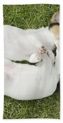 Jack Russell Puppies Bath Towel