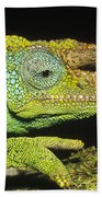 Jacksons Chameleon Male East Africa Bath Towel