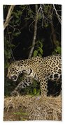 Jaguar Cuiaba River Brazil Bath Towel