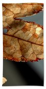 Japanese Maple Leaf Brown - 2 Bath Towel