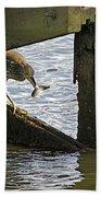 Juvenile Black Crowned Night Heron Bath Towel