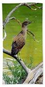 Juvenile Black-crowned Night Heron  Bath Towel