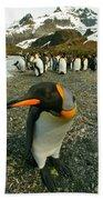 Juvenile King Penguin Bath Towel